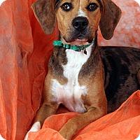 Adopt A Pet :: Mona Cataeagle - St. Louis, MO