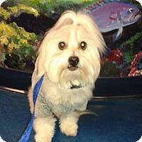 Adopt A Pet :: Fritz - Las Vegas, NV
