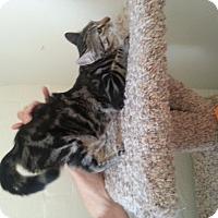 Adopt A Pet :: Epstien - Scottsdale, AZ