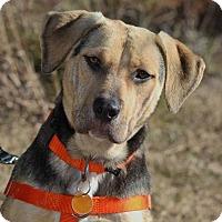 Adopt A Pet :: Tracie - Pinehurst, NC