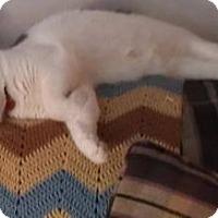 Adopt A Pet :: Hazel - Woodstock, ON