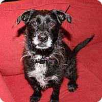 Adopt A Pet :: Trinity - Newtown, CT