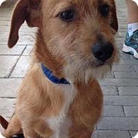 Adopt A Pet :: Oscar - Gainesville, FL