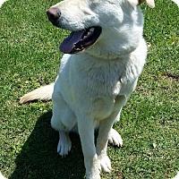 Adopt A Pet :: Cooper - Albany, NY