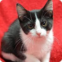 Adopt A Pet :: Long John160861 - Atlanta, GA