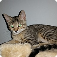 Adopt A Pet :: Macey - Turnersville, NJ