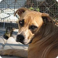 Adopt A Pet :: Allura - Groton, MA