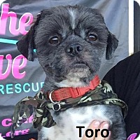 Adopt A Pet :: Toro - Lake Forest, CA