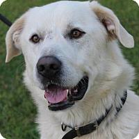 Adopt A Pet :: QUILL - Red Bluff, CA