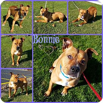 Pit Bull Terrier Mix Dog for adoption in Joliet, Illinois - Bonnie