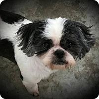 Adopt A Pet :: Shaggy - Paducah, KY