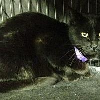 Adopt A Pet :: Louise - Saginaw, MI
