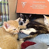 Adopt A Pet :: Snickers, Cashew & Peanut - Island Park, NY