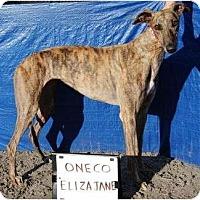 Adopt A Pet :: Ellie - Philadelphia, PA