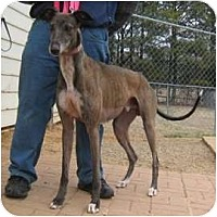 Adopt A Pet :: Taley - Oak Ridge, NC