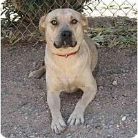 Adopt A Pet :: Momma - Golden Valley, AZ