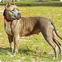 Adopt A Pet :: Maia - Orlando, FL