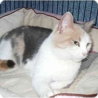 Adopt A Pet :: Kitty Purry - Colmar, PA