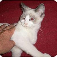 Adopt A Pet :: Da Baby - Brea, CA