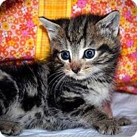 Adopt A Pet :: Corey - Xenia, OH