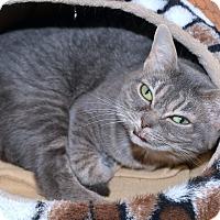 Adopt A Pet :: Fangtasia - Medina, OH