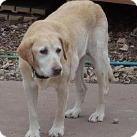 Adopt A Pet :: Brandi (DEAF) - Temple, GA