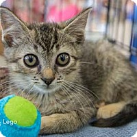 Adopt A Pet :: Floobaby - Merrifield, VA