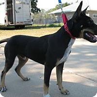 Adopt A Pet :: Willie - Grand Saline, TX