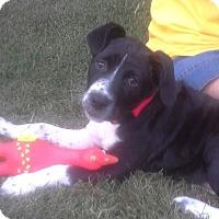 Adopt A Pet :: HOUSTON - Bedminster, NJ