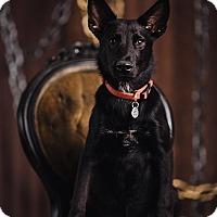 Adopt A Pet :: Jaguar - Portland, OR