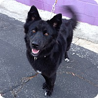 Adopt A Pet :: JETT - San Pedro, CA
