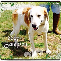 Adopt A Pet :: Sampson - Dillon, SC