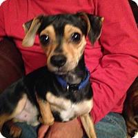 Adopt A Pet :: Neo - Edmond, OK