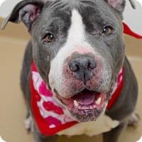 Adopt A Pet :: Enid - Dublin, CA