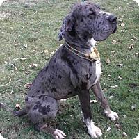 Adopt A Pet :: PAndora - Baden, PA