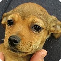 Adopt A Pet :: Tegan - Germantown, MD