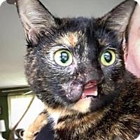 Adopt A Pet :: Fizzgig - Cheltenham, PA
