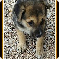 Adopt A Pet :: Raelyn - Tombstone, AZ