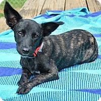 Adopt A Pet :: Mia - Athens, GA