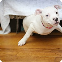 Adopt A Pet :: Tyche - Millersville, MD