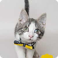 Adopt A Pet :: Sumo - Wyandotte, MI