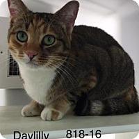 Adopt A Pet :: Daylilly - Cumming, GA