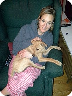 Terrier (Unknown Type, Medium) Mix Puppy for adoption in Homer, New York - Sierra