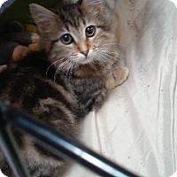 Adopt A Pet :: Arney - Raleigh, NC