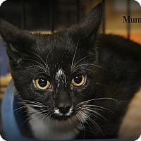 Adopt A Pet :: Mummy - Springfield, PA