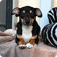 Adopt A Pet :: Ruben - Los Angeles, CA