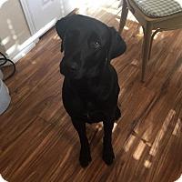Adopt A Pet :: Dixie - Denton, TX