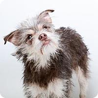 Adopt A Pet :: Micah-Chipped - Decatur, GA