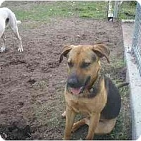 Adopt A Pet :: Sara - Longs, SC
