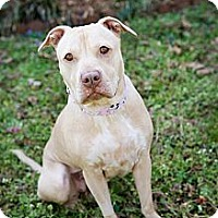 Adopt A Pet :: Hope - Atlanta, GA
